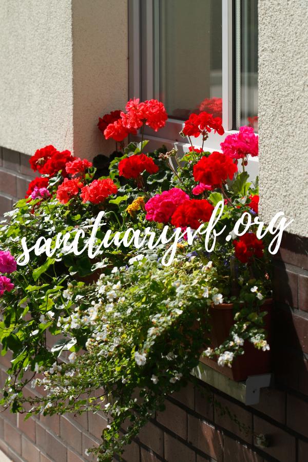 Sichtschutz Mit Blumenkasten OBI