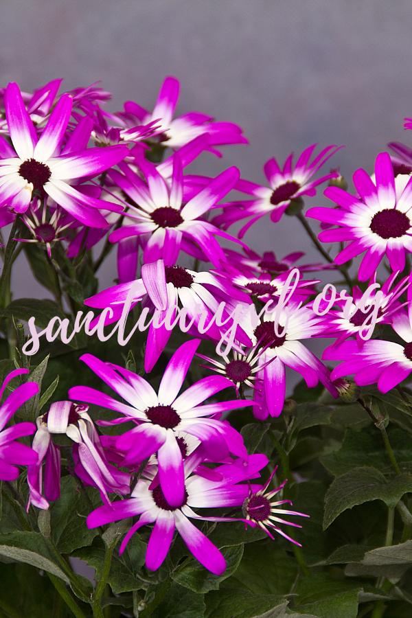Winterharte Blumen