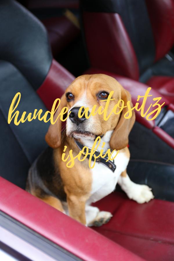 hunde autositz isofix
