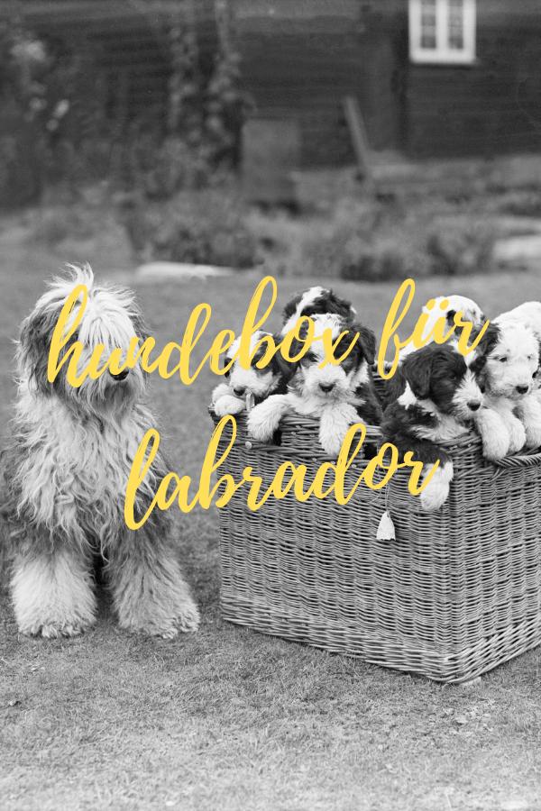 hundebox für labrador größe