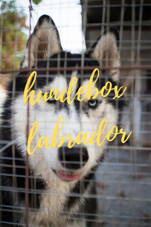 hundebox labrador