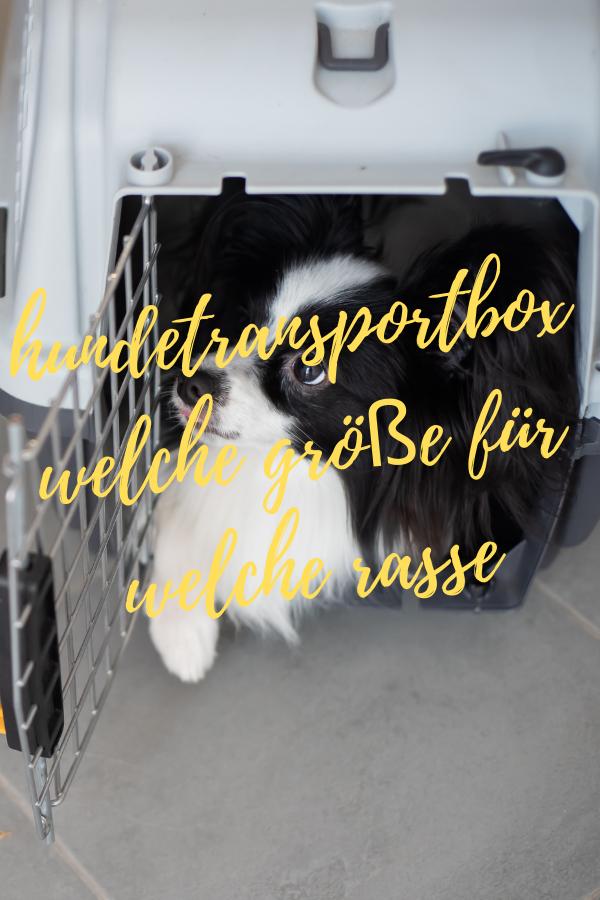 hundetransportbox auto