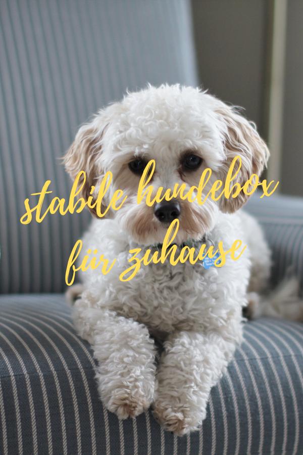 stabile hundebox für zuhause