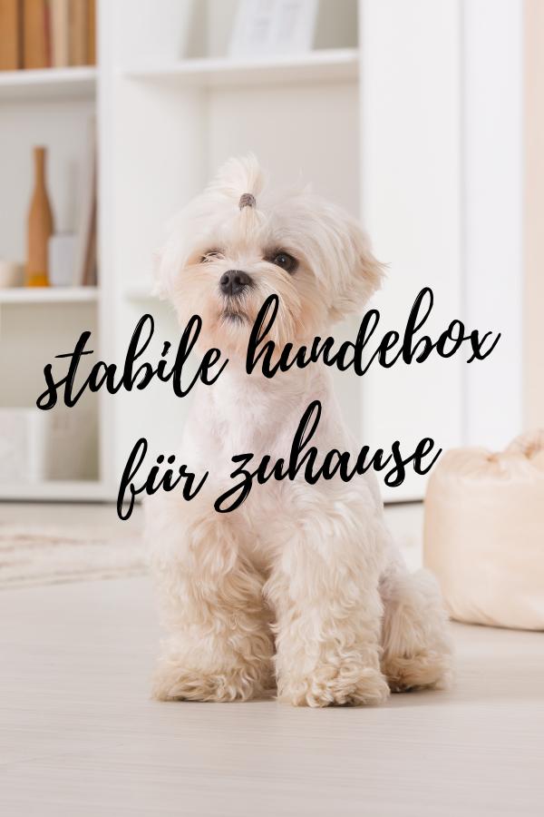stabile hundebox